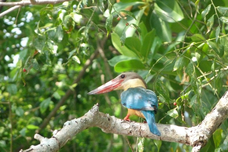 kingfisher, five lesser known natural attractions