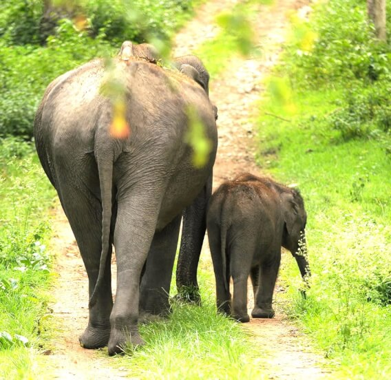 How Many Days Should You Spend in Sri Lanka highly irrelevant, when it comes to planning a holiday package because even you plan for a 7 days Sri Lanka tour or shorter holiday package,