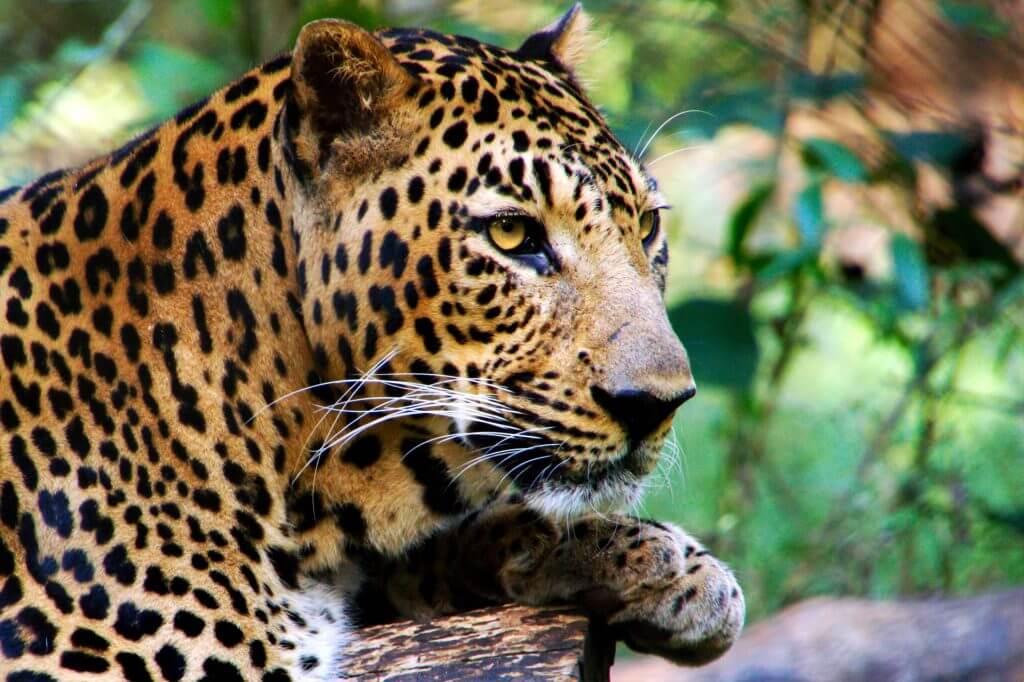national parks in sri lanka, udawalawe national park, sri lanka safari, best safari in sri lanka, yala national park sri lanka, horton plains sri lanka, best national park in sri lanka, minneriya national park sri lanka, What to do and where to stay in Sri Lanka?