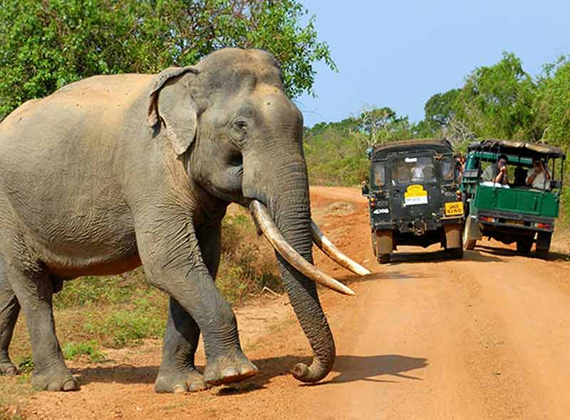 wildlife jeep safari sri lanka