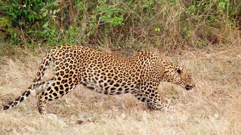 Wildlife watching in Sri Lanka, Yala national park