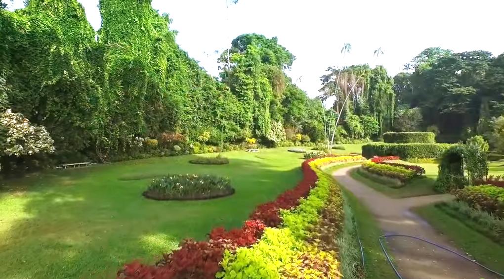 Beautiful peradeniya botanical garden