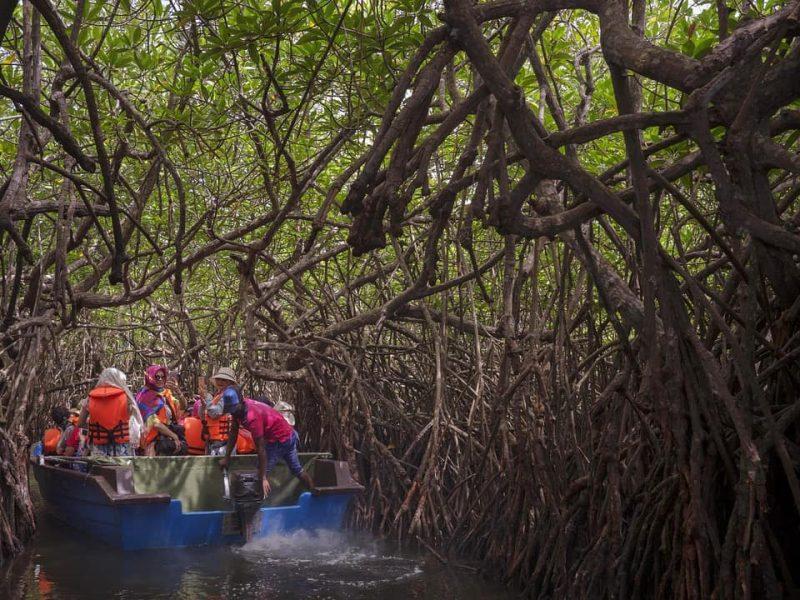 mangrove sri lanka