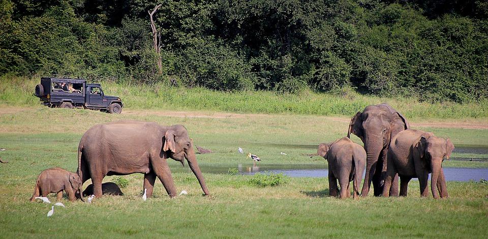 Sri Lanka Safari and Beach holiday