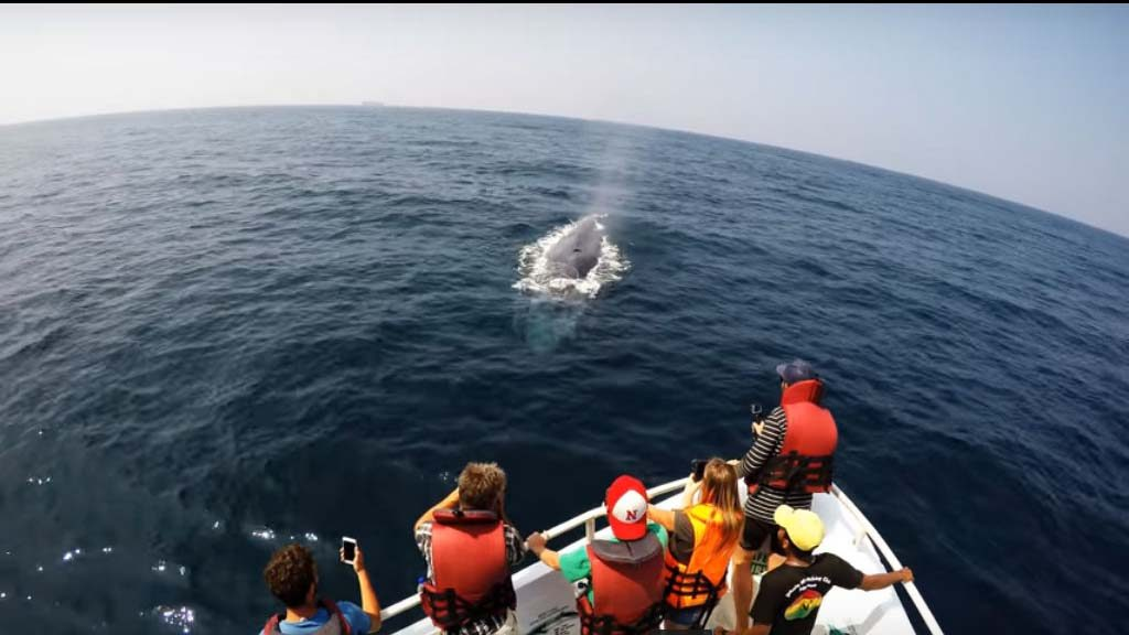 Sri Lanka | Whale Watching Tour with Transportation-2