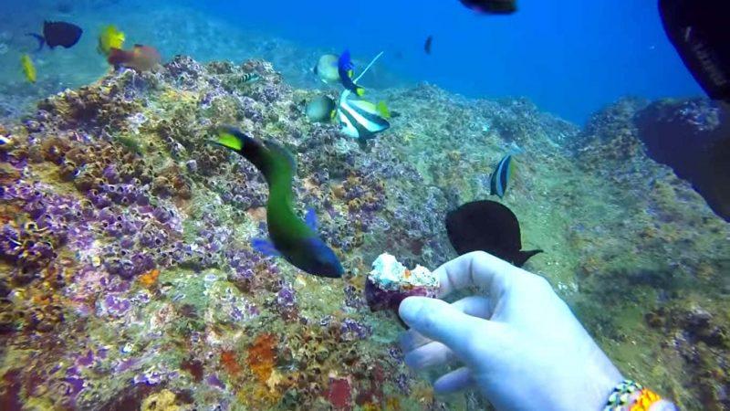 diving in hikkaduwa, Bentota to Galle, galle tour from bentota