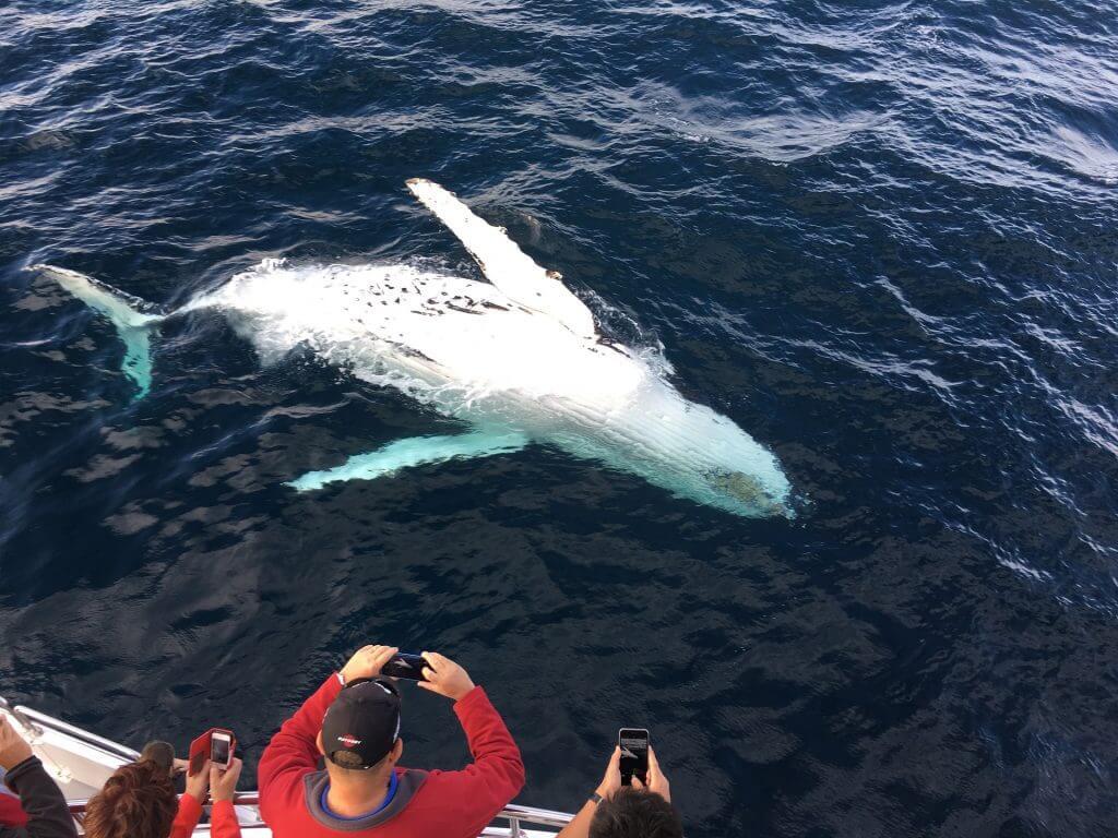 whale watching sri lanka, sri lanka whale watching, whale watching trip sri lanka, blue whale watching sri lanka