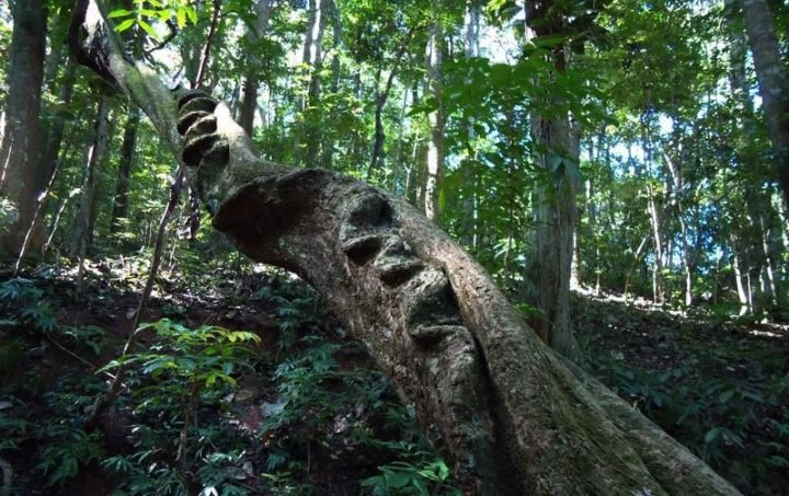 Udawattakele sanctuary, Trekking in Kandy