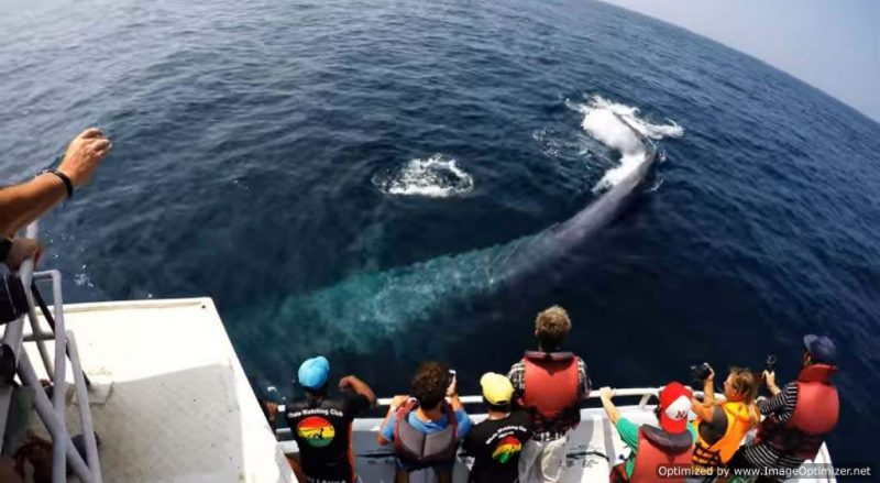 whale watching Sri Lanka, whale watching is part of this Sri Lanka itinerary for 6 days