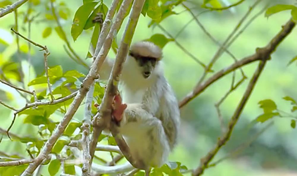 Spotting white monkeys, sri lanka wildlife tours, sri lanka safari tours, sri lanka wildlife safari, sri lanka wildlife holidays