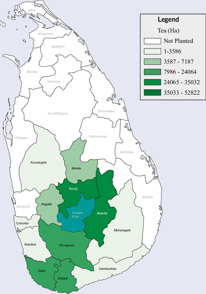 distribution of tea plantation in sri lanka