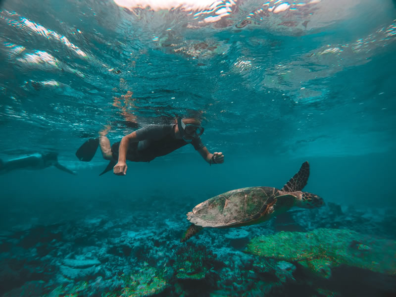Diving sri lanka with sea turtles