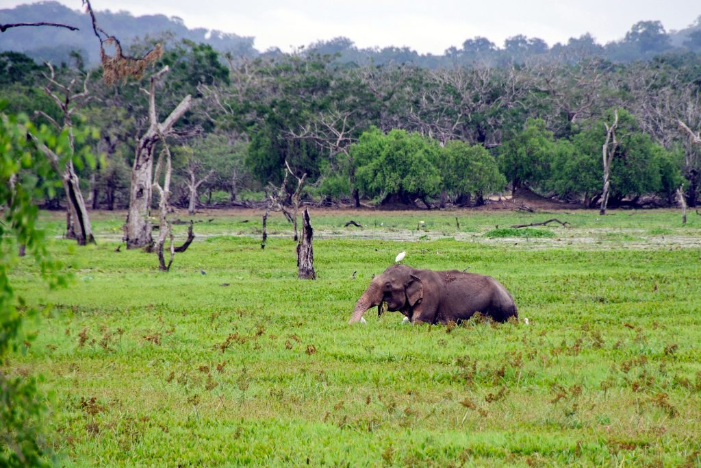 sri lanka itinerary 5 days, sri lanka 5 day tour, 5 day trip to sri lanka, 5 days sri lanka itinerary, Is 5 days enough in Sri Lanka? How can I spend 5 days in Sri Lanka?