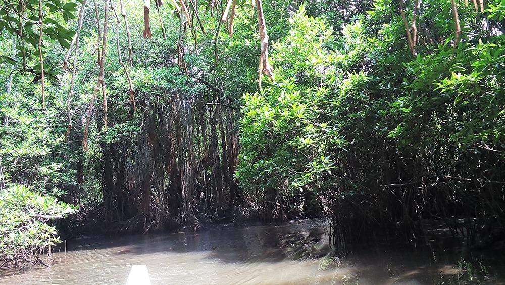 Madu river safari Vs or Bentota River safari